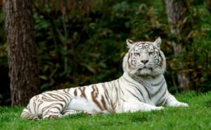 Czech Liberec Zoo